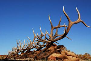 photo-elk-lineup